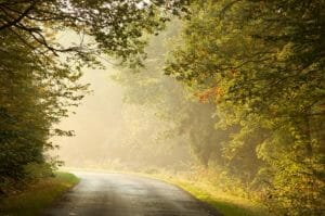 Road In Forest-Opiate Addiction Treatment Center-HarmonyPlace1